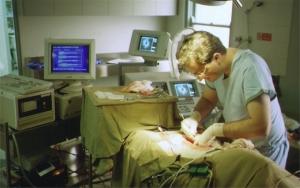 Michael Neale (surgeon) (1992?)
