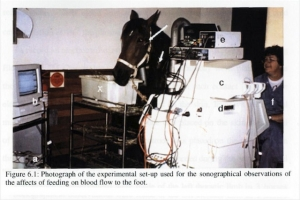 Kaye Griffiths measuring blood flow in horse's leg